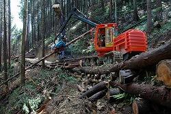 本作業路の上で造材される。間伐後に残るこの道が次回間伐の基盤となる