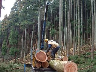 伐採費には伐採、玉切りおよび加美町内製材工場までの輸送費まで含まれている