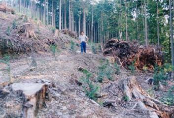 皆伐後の機械での枝条整理が地拵えを兼ねる。大きな棚積みになるが、経費が押さえられるとお客さんには好評とか